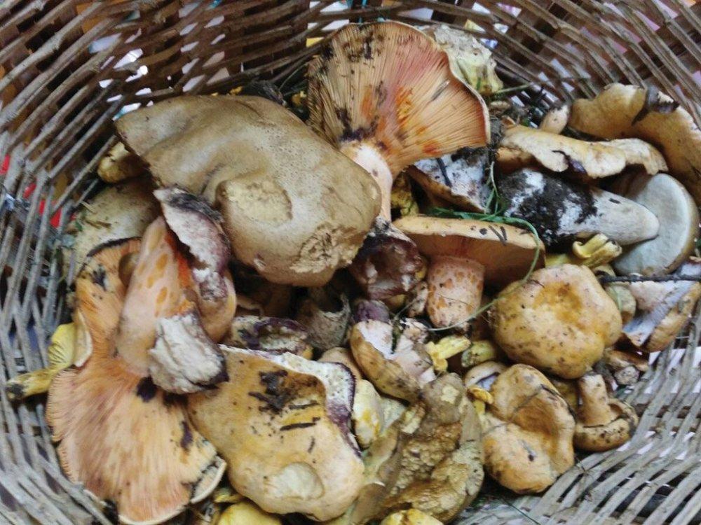 mushroom-picking