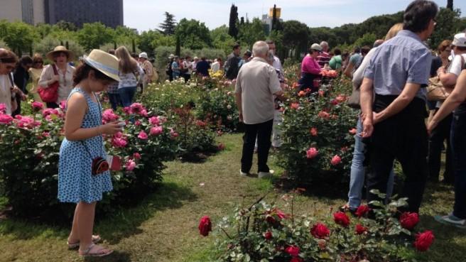 roses4-760x428